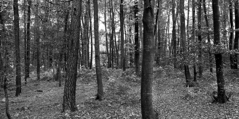 Unser Holz - unser Stolz